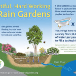 Courtesy of 12,000 Rain Gardens of Puget Sound.