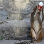 Swayambu monkey drinking coke
