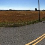 Freshly cut grain across the street from the farm and orchard