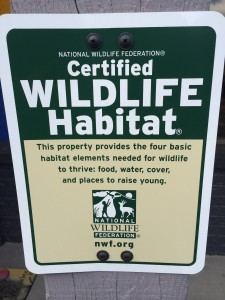 Very cool for an auto repair shop to intentionally be creating wildlife habitat