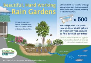 Courtesy of 12,000 Rain Gardens of Puget Sound.